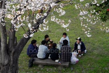 Himeji Castle cherry blossom hanami