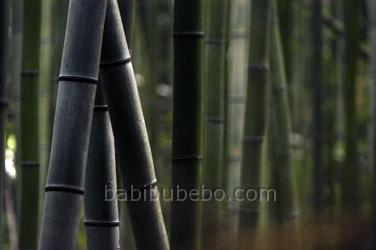 arashiyama bamboo photo kyoto