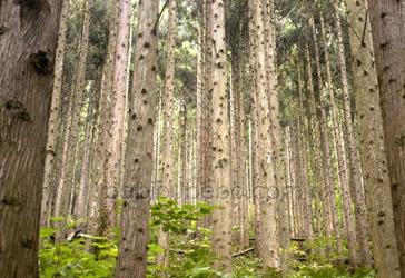 omoshiroyama kogen yamagata trees