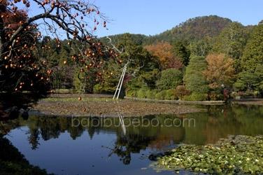 ryoanji lake
