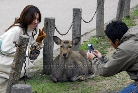 Nara Koen deer