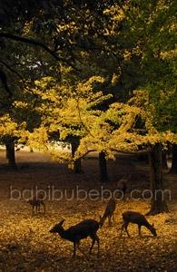 Nara Koen deer fall