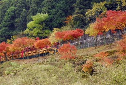 Sagano Romantic Train Ride