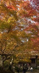Jojakoji Arashiyama