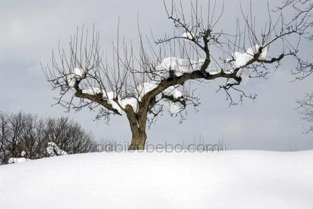 Asahiyama Zoo Tree